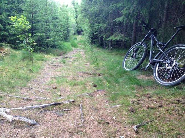 Fin stig med mycket rötter, just detta är min cykel bra på. Den går riktigt fint över dessa partier.